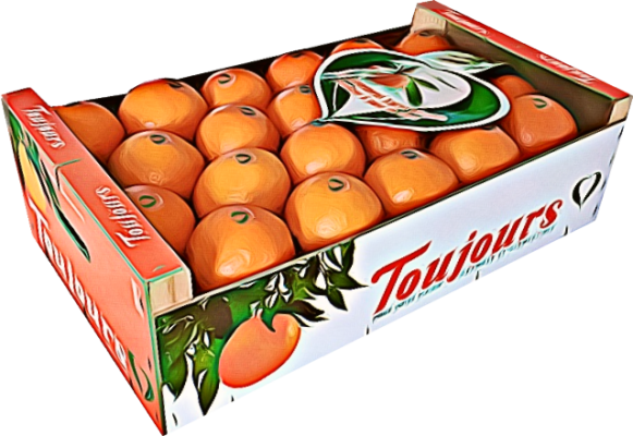 Cagette Orange Agrumes Toujours